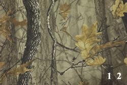 Осенний дуб-2